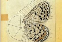 butterfly-mariposa-borboleta