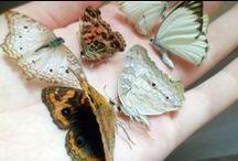 Moths and Butterflies / FLUTTER, FLUTTER!