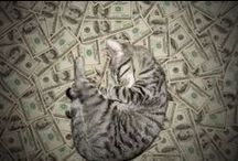 Cash Cats / Cash Cats