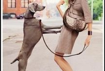 Weimaraner, etc. / Beautiful, graceful, funny Weims--and other dogs that make me smile.  / by Lisa Siefker Bailey