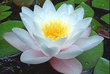 Flori/Flowers/Flores / Floricele