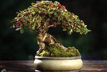 Copacei frumusei / Natura