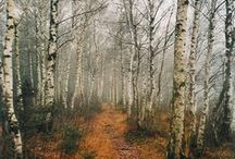 October beauty...inspiration.... / by Val McLaren