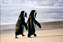 Penguin Love / by Tasha Gaddis