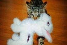 Gatos / Cats / by Mó Itu