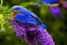 Birds / by LindyAnn White