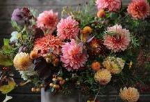 Flowers / by Kody Sparks