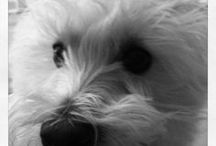 Westie Signs and Stuff / Dog signs for Westie and other dog stuff! http://www.signswithanattitude.com/dog_signs/westie.html