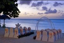 Beach Wedding / Colorful Oceanside/Poolside Weddings.