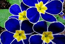 Royal/Yellow Wedding / Bright Yellow & Rich Royal Blue