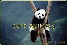 CUTE & ADORABLE--ANIMALS / GODS BLESSINGS...ANIMALS HAVE FEELINGS..LOVE THEM...ENJOY THEM...HELP STOP ANIMAL ABUSE