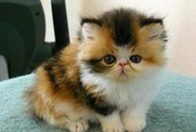 I LOVE CATS .... VIDEOS&PICTURES / FELINES ARE SO AWESOME ... SO ADORABLE ... CUDDLY ... AND THEY GIVE SO MUCH LOVE AND SMILES