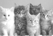 Animals♥ / by Sunniva Het