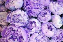 Lilac/Lavender Wedding