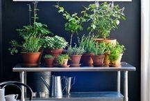 Herbs, Plants & Gardens