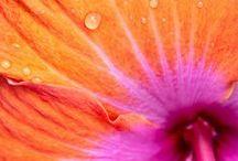 Fuschia/Orange Wedding / Hot Pink/Fuschia, Orange & Tangerine for Weddings!