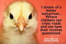 Chicken Jokes AcreageLife / Chicken Jokes