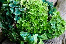 Teal & Green Wedding / Teal, Aqua & Green Remix for Weddings