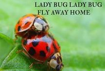 Lady Bug Lady Bug Fly Away Home / THERE IS SOMETHING SO CUTE ABOUT LADYBUGS, and They are good for flowers