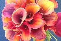 Wedding in Mango / Wedding Themes & Colors