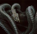 Descendants | Aloïs Goliath / La mort s'approche pour le prendre. Mais la mort ne peut prendre ce qui est déjà mort.