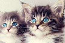 ❤Lovely Animals❤ / Schattige diertjes