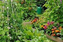 How Does Your Garden Grow? / Balcony and container gardening -- growing good stuff in limited space / by Bonita Hyman