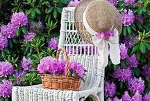 Sweet garden retreat.