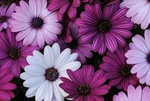 Flowers / Welcome to my boards. Pin whatever inspires you.....no pin limits!!!!!