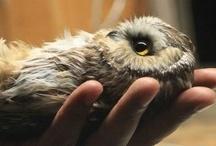 <3 Owls <3