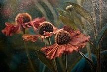 Inspirational - Flowers