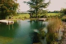 Estanques y piscinas naturales / Si puedes, no lo dudes, una piscina natural  o biopiscina es autorregulable; sus sistemas de depuración son naturales en vez de químicos. El proceso de depuración se hace por medio de plantas que ayudan a oxigenar y eliminar los nutrientes; de esta manera se evita la propagación de algas y otros microorganismos no deseables, como por ejemplo larvas de mosquito.