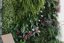 Jardinagem / Inspirações