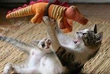 Pets - Cats