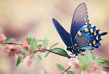 Butterflies / As a symbol of lymphedema awareness.