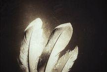 2. Feathers & Feelings / Beauty