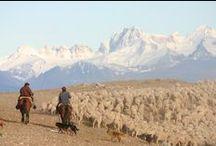 // LES BERGERS // / Les bergers sont en amont de notre activité ; ils apportent à leurs troupeaux tous les soins nécessaires pour valoriser leurs toisons qui sera notre matière première.  Brun de Vian Tiran sélectionne les meilleures laines et poils sur les 5 continents pour confectionner des articles d'exception.