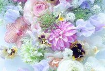 Fabulous Flora / Flowers,  Plants,  Succulents  and  Shrubs