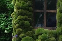 moss & secculent / Moss wall & art