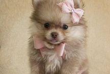 Prescious Puppies