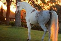 Beautiful horses, oh my! / Beautiful horses! Magnificent horses! Amazing horses! Stallions, Colts, foals, and mares, oh my! I love horses! Horse photography and horse paintings. Pin as much as you want.