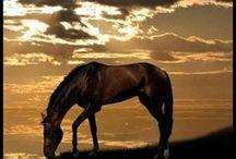 Horses / elegantní a krásní
