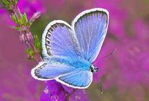 Butterflies / létající drahokamy (podle angličtiny létající máslo..)