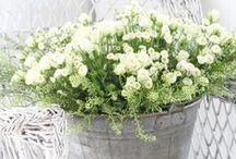 Garden Glory / Beautiful Home Garden exterior design & decor  as well as  Botanical Gardens