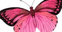 Frequent Flyers / Butterflies, Dragonflies,  Moths,  Ladybugs,  Mantis,  Flies, Grasshoppers,  Bees,   etc