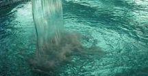 Exotic Aquatics / Swimming pools,  Ponds, Tanks,  Water Features  & Aquariums