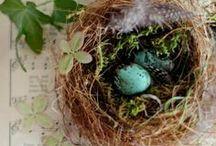 ~ bird, nest ~