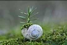~ snail ~