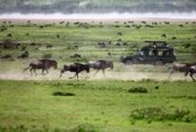 Tanzania / There is no more beautiful and better place on earth to make an unforgettable wildlife safari than the magical wilderness of Tanzania. With BMS-Travellers you enter in the footsteps of Ernest Hemingway and you'll experience the real Africa.