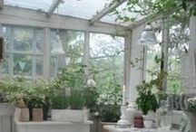 ~ greenhouse ~